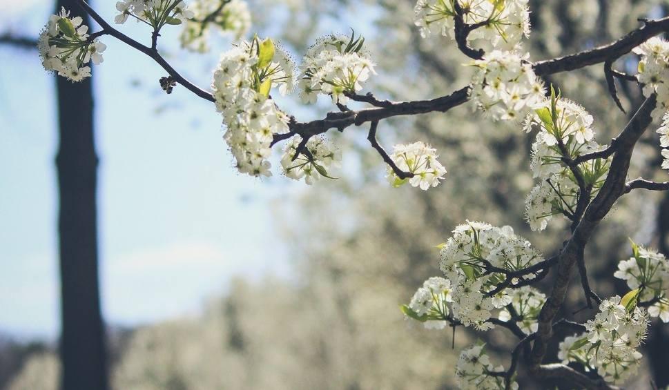 Film do artykułu: Prognoza pogody na Wielkanoc 2019. Jaka pogoda czeka nas w święta? Poniedziałek zapowiada się rzeczywiście lany