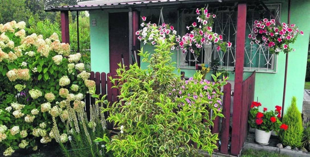 Hortiterapia: Leczenie ogrodem