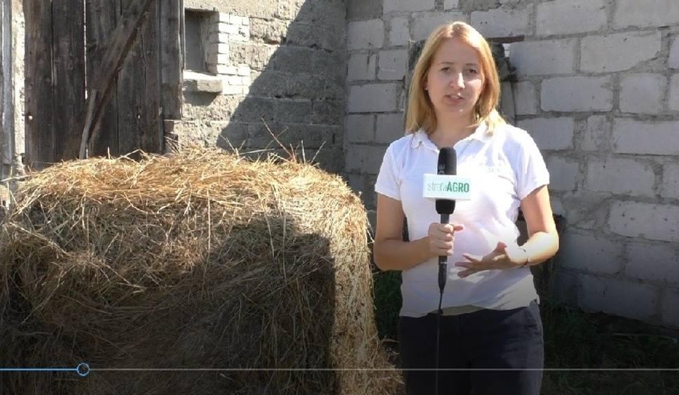 Film do artykułu: Agro Pomorska odcinek 34. U rolników po nawałnicy, o żniwach, suszy i pomocy [wideo]