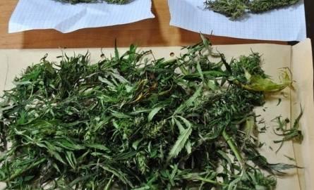 Policja znalazła też marihuanę