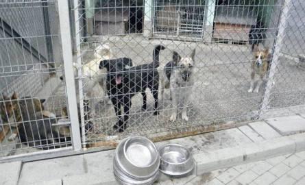 Bielszczanka z Chicago przekazała 100 tysięcy dolarów na Miejskie Schronisko dla Zwierząt Reksio