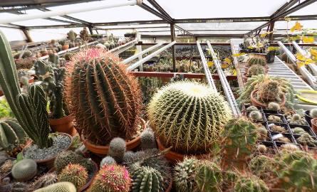 W domu i w szklarni ma około 200 tys. kaktusów [ZDJĘCIA]