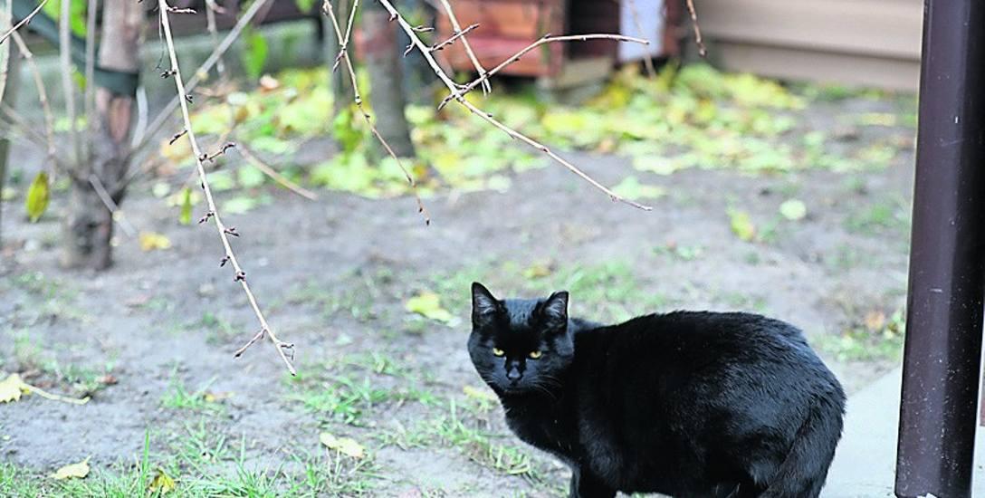 Budka przy ul. Maciejkowej znajduje się przy śmietnikach. W podobnej, która stoi niedaleko, od dwóch lat mieszkają koty.