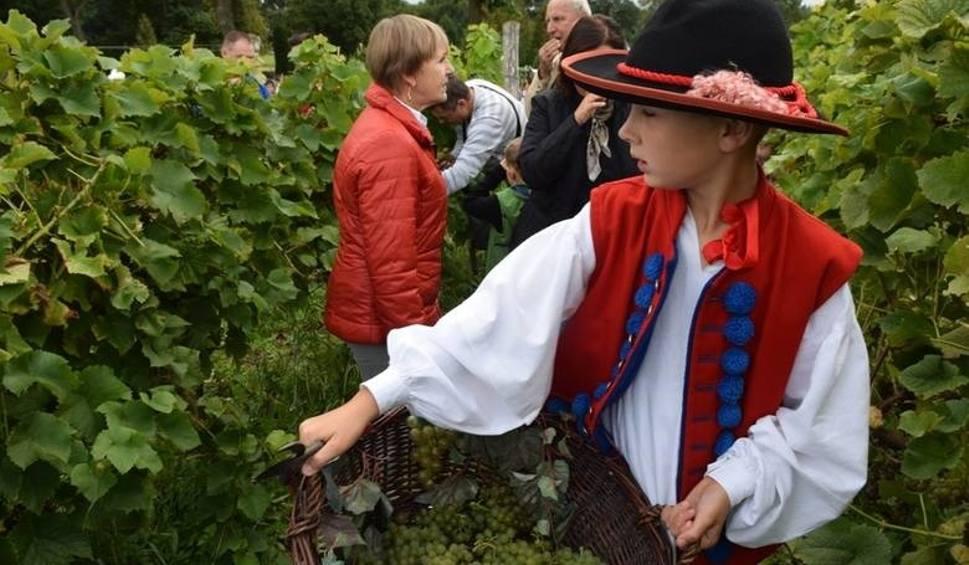 Film do artykułu: Winobranie na Winnicy Samorządowej w Zaborze. Będzie barwny korowód, wspólne zbieranie winogron i moc atrakcji