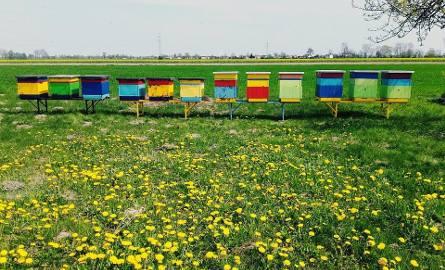 Zmiany w dopłatach do rolnictwa ekologicznego. Pomoc ma być bardziej powiązana z produkcją