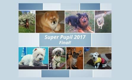 Super Pupil 2017 w regionie podkarpackim. Trwa finałowe głosowanie