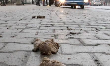 To niestety częsty widok na chodnikach w Radomiu. Tak wyglądał w piątek przystanek przy ulicy 25 Czerwca.