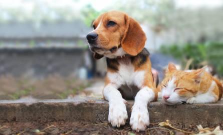 rasy psów, które lubią koty rasy psów przyjazne dla kotów te rasy kotów dogadają się z psami