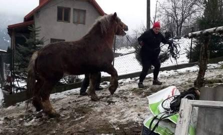 Interwencja organizacji obrońców zwierząt w Milówce
