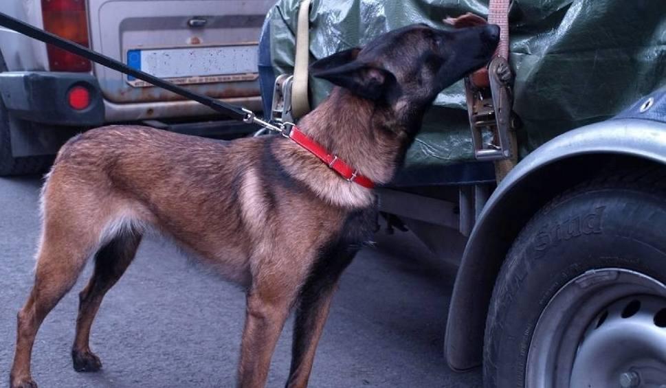 Film do artykułu: Pies służbowy straży granicznej w Dorohusku wywęszył narkotyki