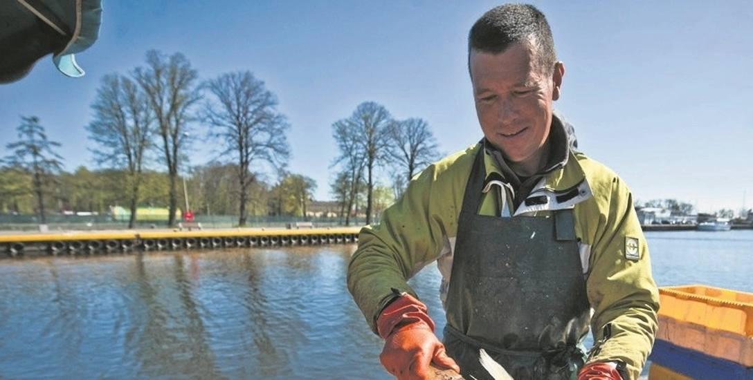 Od stycznia nie ma możliwości poławiania dorsza na Bałtyku. Ryba ta drożeje. W sklepach za kilogram fileta z dorsza możemy zapłacić już prawie 50 zł