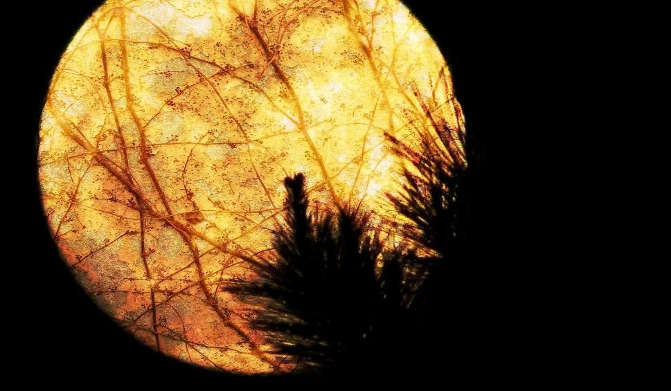 Film do artykułu: Horoskop dzienny na czwartek 2 lipca 2020. Wróżba na dziś dla Barana, Byka, Bliźniąt, Raka, Lwa, Wagi, Strzelca, Wodnika i Koziorożca