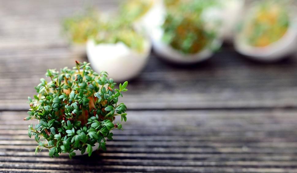 Film do artykułu: Nie wyrzucaj skorupek po jajkach! 14 sposobów na ich wykorzystanie