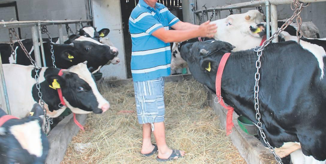 Po wypadku wróciłem do rodzinnej wsi. Długo zastanawiałem się nad profilem gospodarstwa. W końcu postawiłem na hodowlę byków - mówi Jarosław Gadomsk