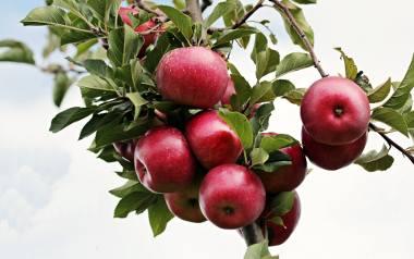 Jesienna kuchnia wabi nas smakiem i zapachem dojrzałych owoców, warzyw i grzybów. Grzechem byłoby nieskorzystanie z takiej okazji. Szykujmy się więc
