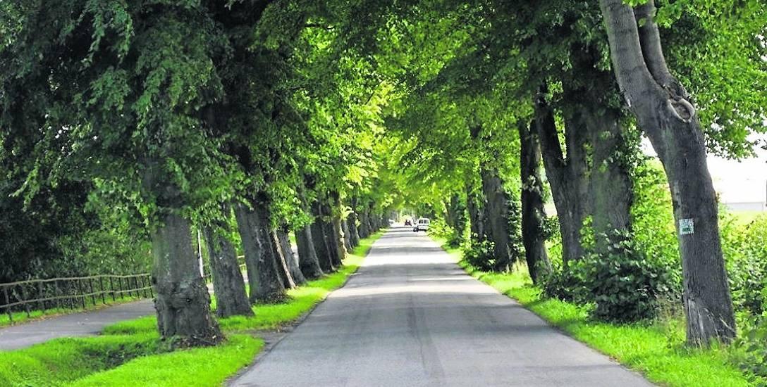 Aleja lipowa rośnie wzdłuż jednego z trzech wjazdów do Ustronia Morskiego z drogi krajowej nr 11