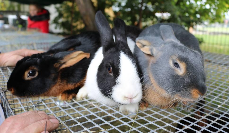 Film do artykułu: XV Jesienna Giełda Ogrodnicza w Boguchwale. Wystawa królików, podkarpackie smaki i wiele innych atrakcji już w ten weekend