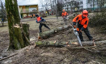 PiS zapowiada zmiany ws. wycinki drzew. Pomaska: Dwa tygodnie starczą, żeby zrównać Polskę z ziemią