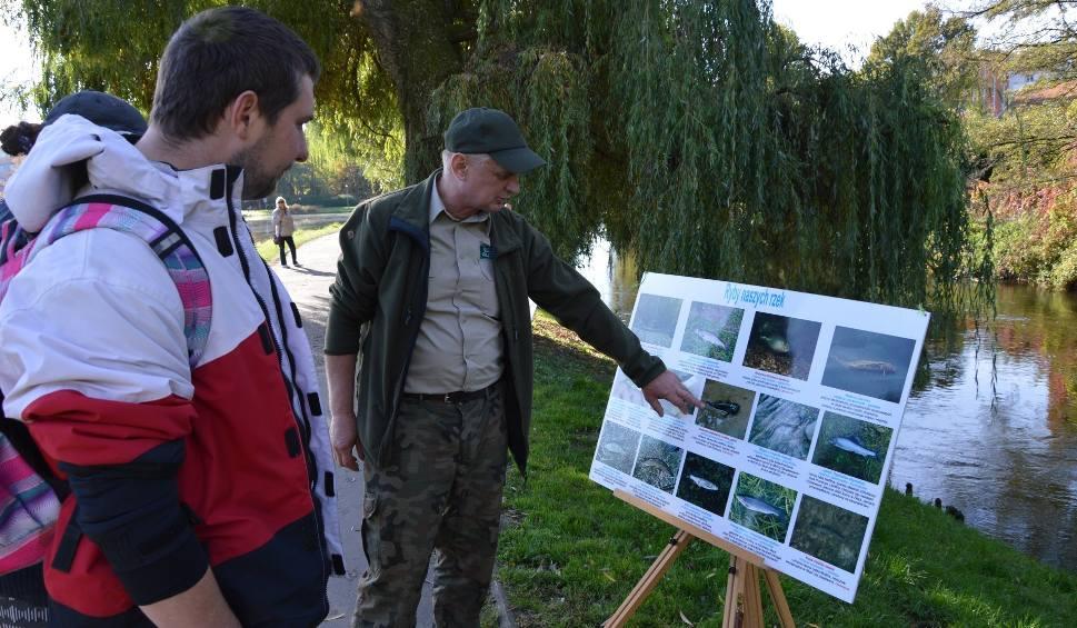Film do artykułu: Przyrodnicy zorganizowali dzień otwarty nad Słupią i Stawkiem Łabędzim w Słupsku (zdjęcia, wideo)