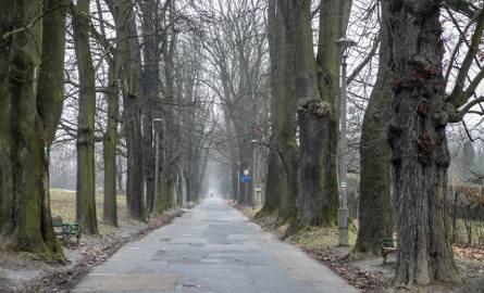 Kraków. Szykuje się wycinka drzew wzdłuż zabytkowej alei Waszyngtona