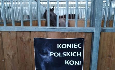 Ten plakat pojawił się podczas Narodowej Wystawy Zwierzat Hodowlanych w Poznaniu