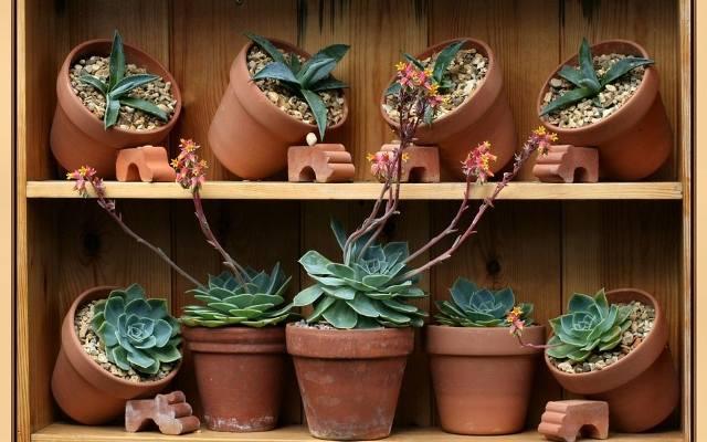 Nawet rośliny w tradycyjnych doniczkach ceramicznych można wyeksponować w oryginalny sposób.