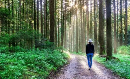 Ministerstwo Środowiska wprowadza zakaz wstępu do lasów i parków narodowych