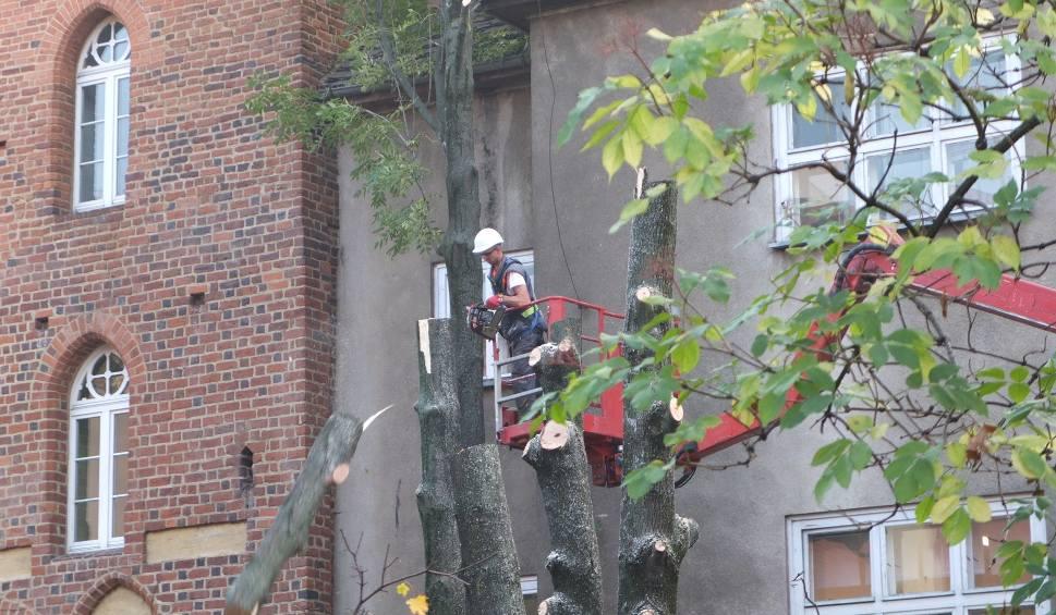 Film do artykułu: Rzeź w centrum Opola. 37 drzew do wycinki. Powód? Inwestycja