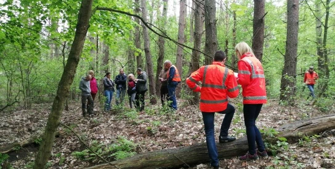 Pod topór pójdą tysiące drzew. Ustąpią miejsca drodze S10