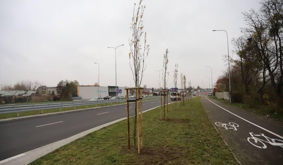 Film do artykułu: Zasadzili nowe drzewa przy Alei Wojska Polskiego w Radomiu. Zobacz zdjęcia
