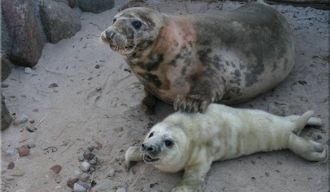 Hel: W fokarium narodziły się foczki [ZDJĘCIA] - Dziennikbaltycki.pl