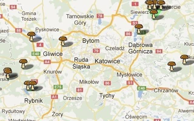 Gdzie Na Grzyby Zobacz Mapy I Wybierz Miejsce Dziennik Zachodni