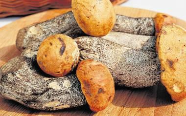Sezon na świeże grzyby to znakomita okazja do wyczarowywania wspaniałych dań w domowej kuchni