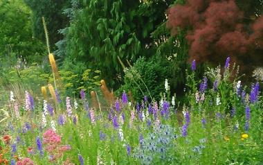 Ogród Pani Władzi i Pana Stasia