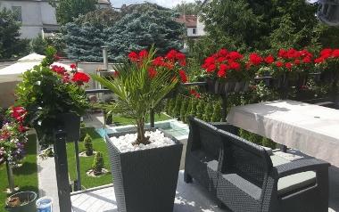 Ogród siwego