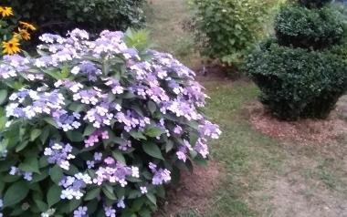 Ogród Anny Pluty w powiecie kieleckim