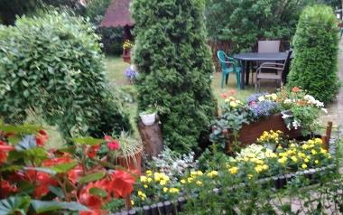 Ogród Elżbiety Grzybek z Włoszczowy