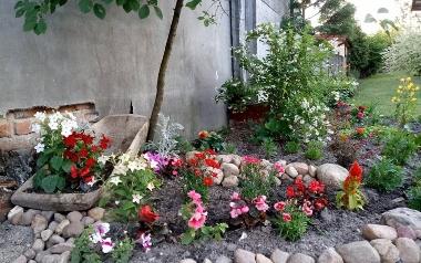 Ogród Julity Pury z Pilczycy, powiat włoszczowski