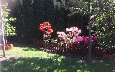 Ogród Krzysztofa Kantora w Kielcach