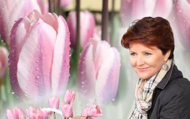 Tulipan 'Jolanta Kwaśniewska'