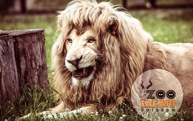 "Ogród Zoologiczny ""ZOO SAFARI BORYSEW"""