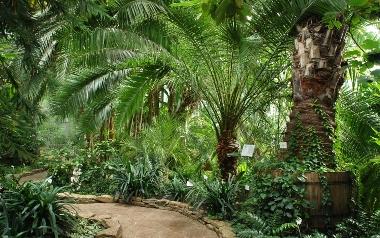 Palmiarnia Ogrodu Botanicznego