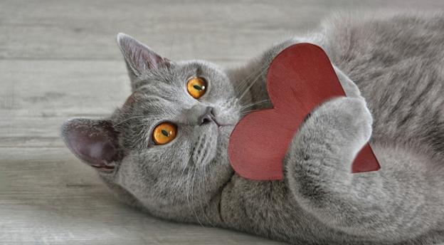 Test wiedzy o kotach. Tylko dla prawdziwych kociarzy! QUIZ