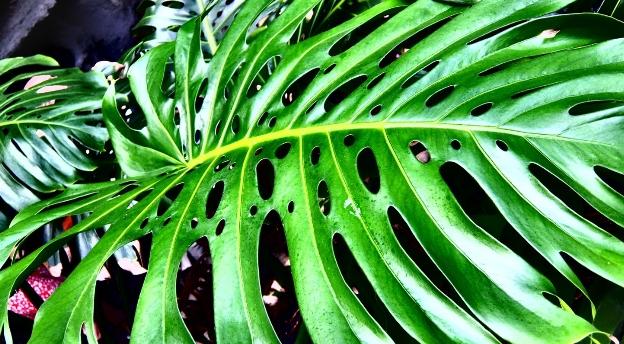 Czy rozpoznasz roślinę doniczkową po jej liściach i kwiatach?
