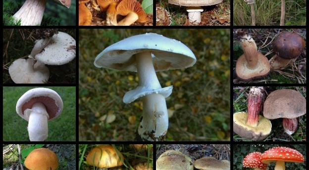 Wielki test grzybiarzy. Rozpoznasz grzyby na zdjęciach?