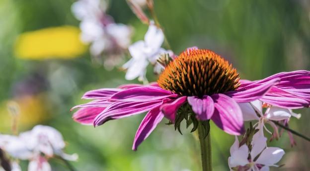 Czy znasz te letnie kwiaty? Sprawdź!
