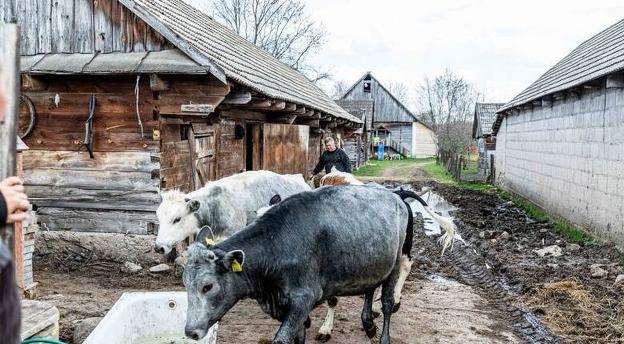 Czy znasz dobrze serial Rolnicy. Podlasie? Oto quiz dla fanów tej produkcji