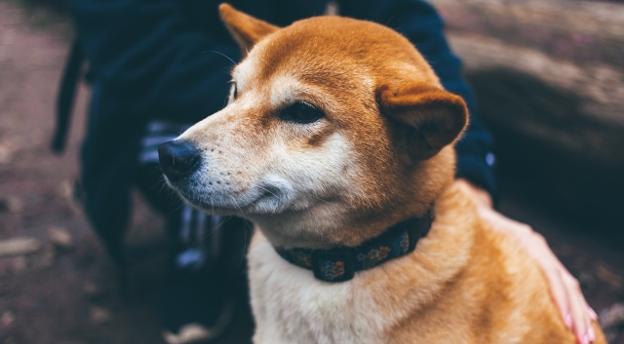 Kochasz zwierzęta? Co mówi twój pupil? Sprawdź, czy znasz język psów i kotów! QUIZ