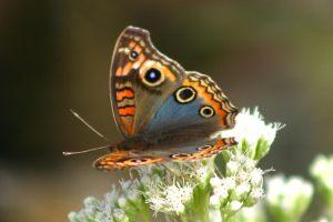Motyle odczuwają smak... stopami