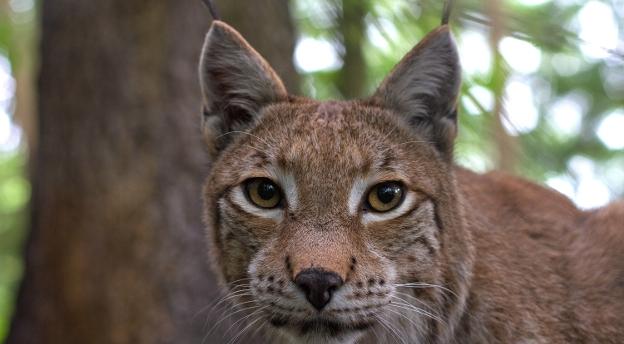 Kochasz polski las? A co wiesz o dzikich zwierzętach żyjących w Polsce? QUIZ